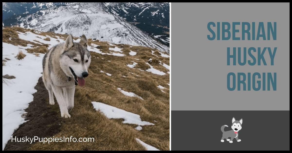 Siberian Husky Origin