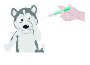 Siberian Husky Vaccination Shots