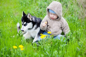 Child / baby with puppy husky sitting on the grass