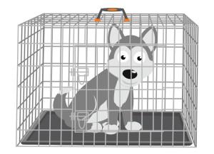 Siberian Husky in a Crate