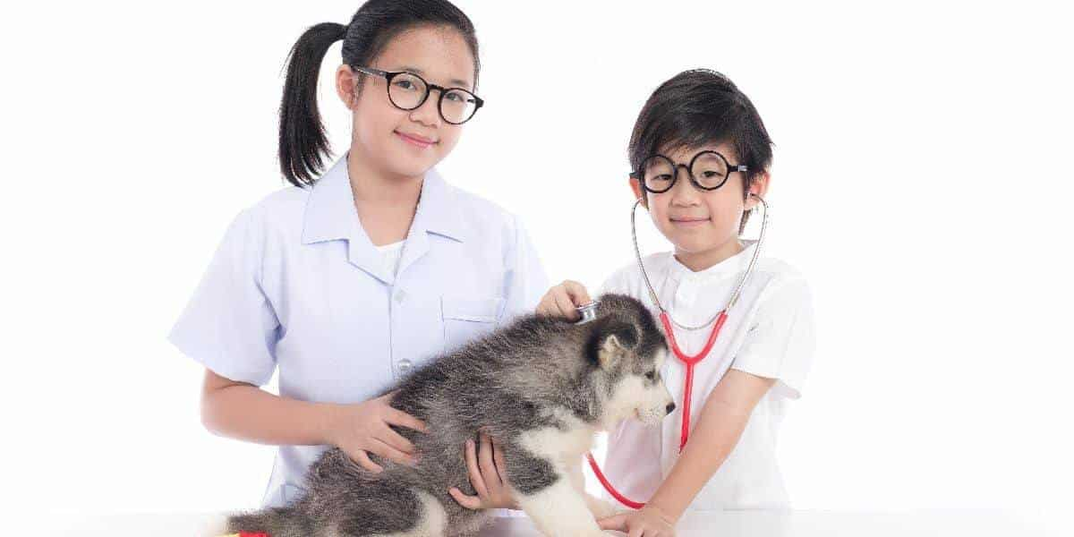 Health-Problems-with-Siberian-Huskies