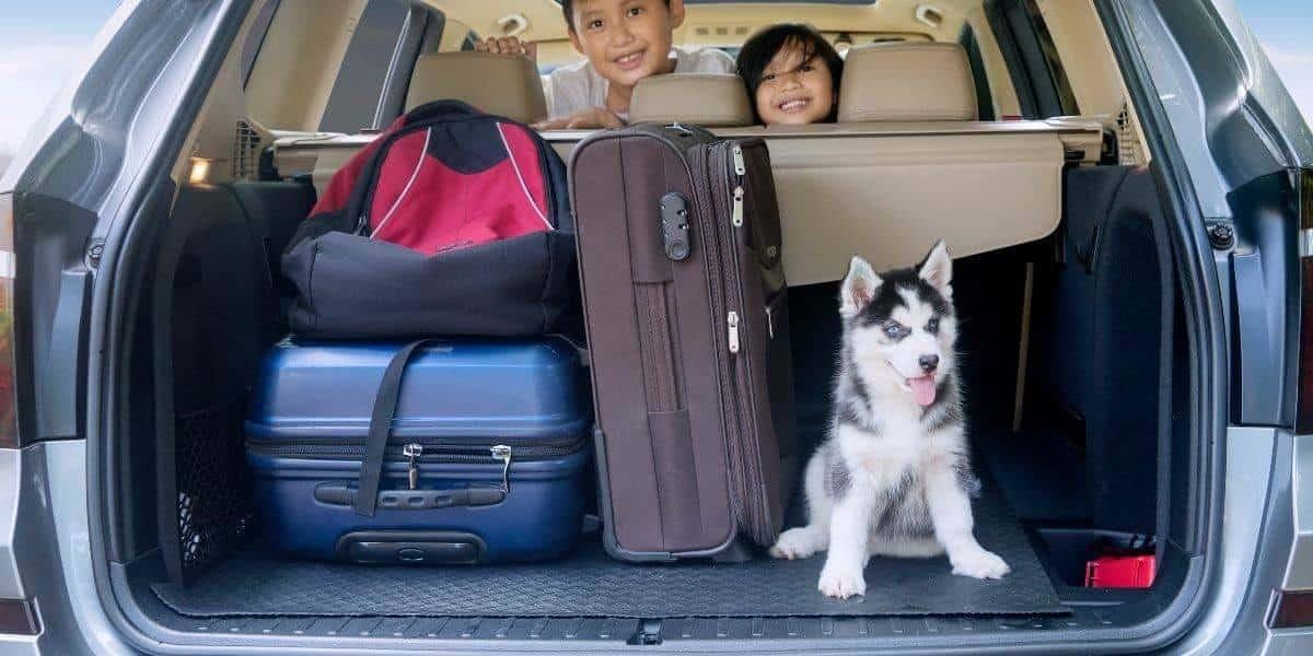 Siberian-Husky-Car-travel