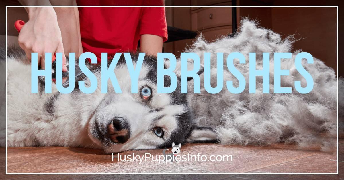 Best Brush For Husky