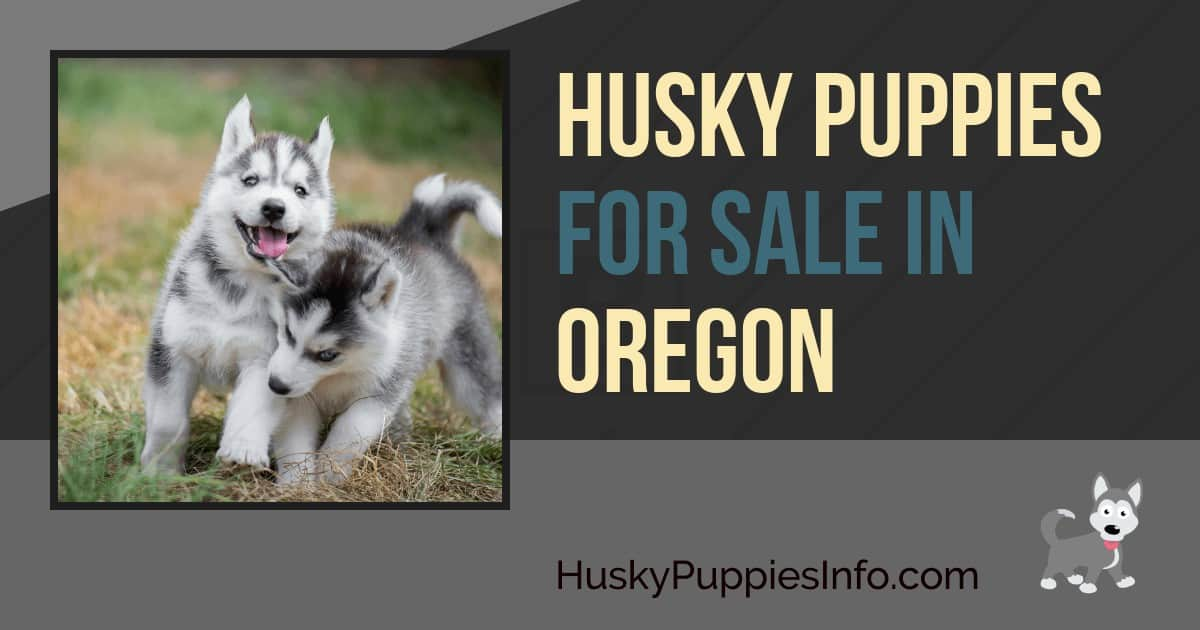 Husky Puppies For Sale in Oregon