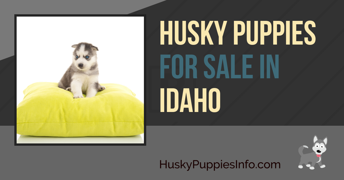 Siberian Husky Puppies For Sale in Idaho