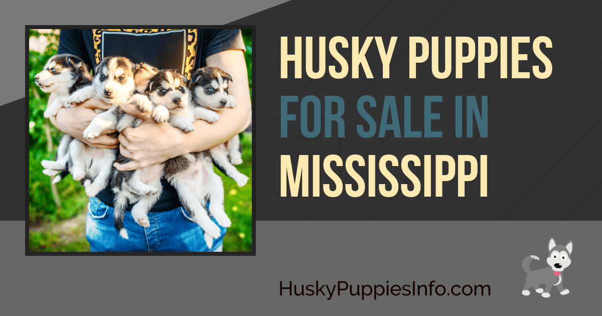 Siberian Husky Puppies For Sale In Mississippi