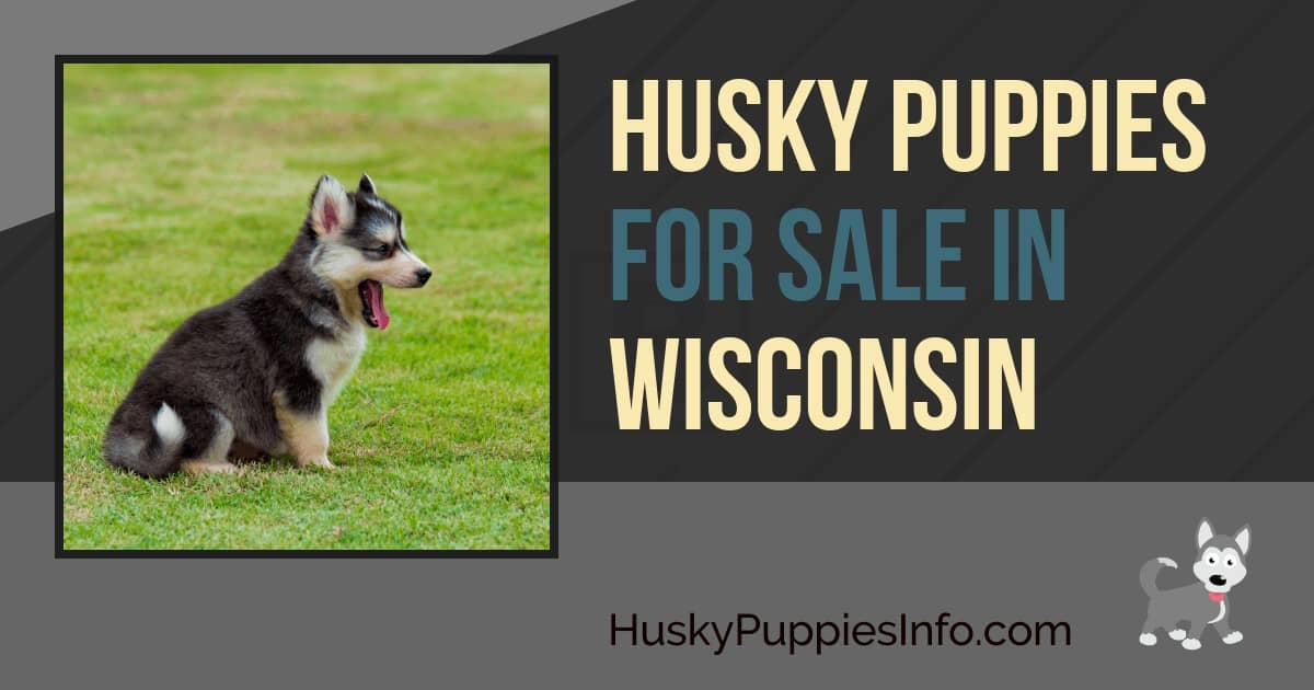 Siberian Husky Puppies For Sale In Wisconsin
