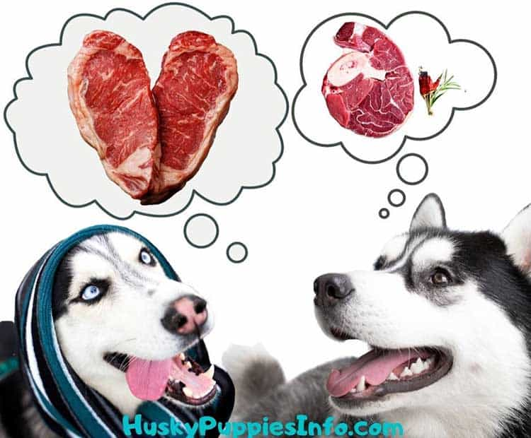 Two Siberian Huskies thinkung about raw meat