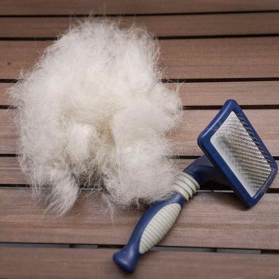 blue colored bristle brush and klee kai's fur after brushing