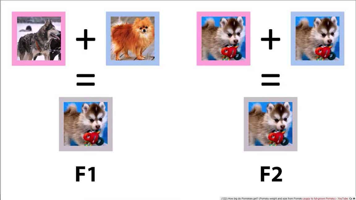 Two types of Pomsky generation: F1 and F2